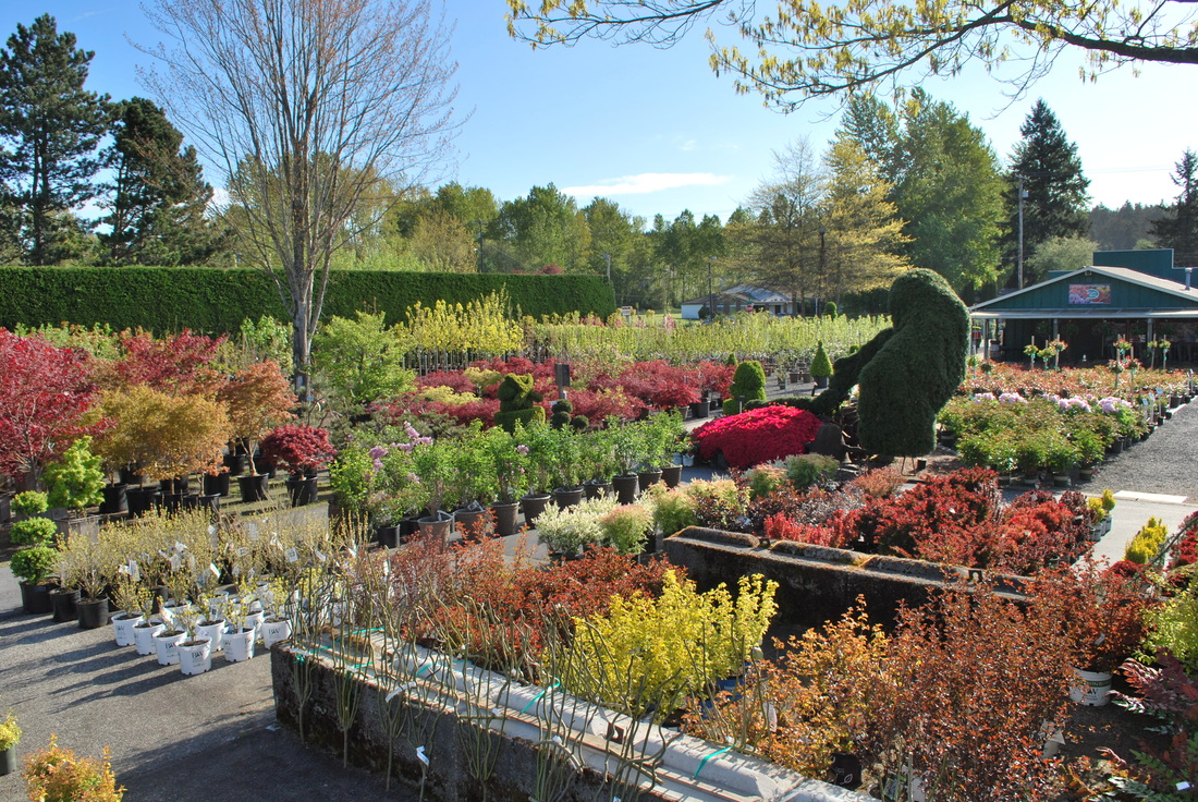 75 Years Later They Have Blossomed Into A Full Scale Four Acre Nursery With Vast Selection Of Colorful Plants